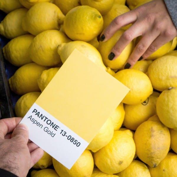 Pantone amarillo