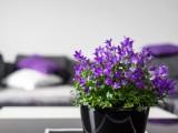 Decora y pinta las paredes en violeta, morado o lila