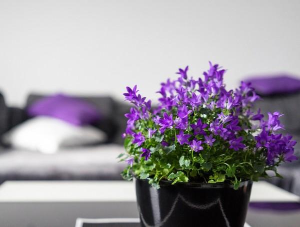 Violeta interior