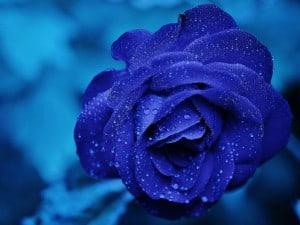Psicología del color: el azul