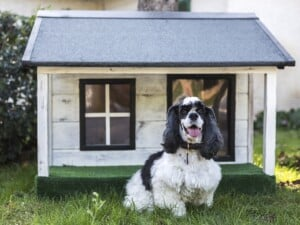 4 consejos al pintar la casa de tu perro